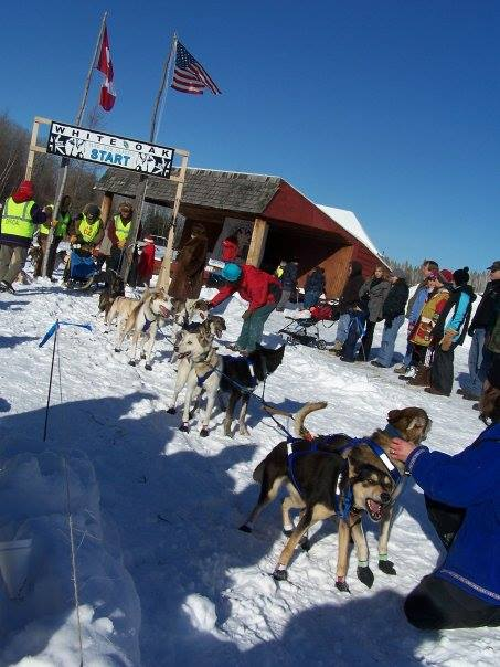 sled-dog-race-1